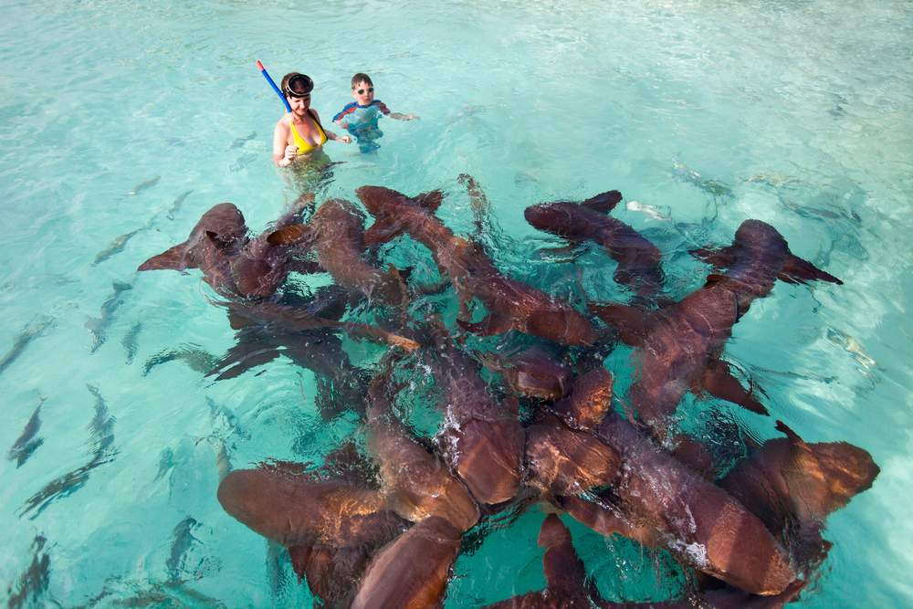 shark bahamas