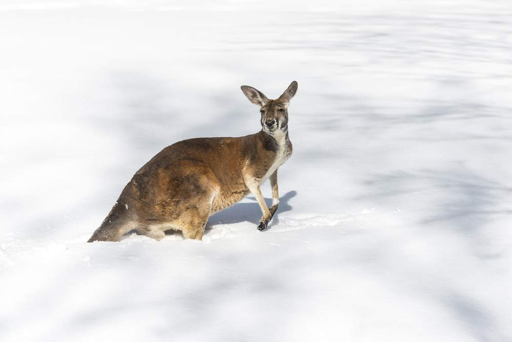 cold australia