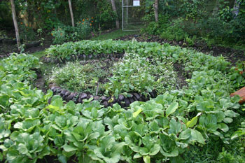 Grow Your Own Veggies on the Road - Ecovillaging at its Finest