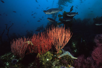 channelreef