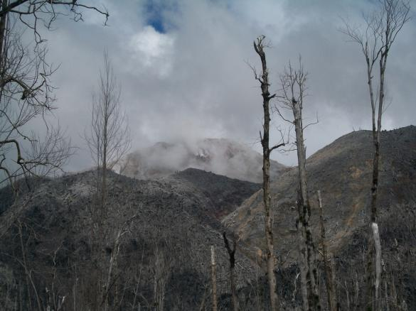 Volcán Chaiten with destroyed trees