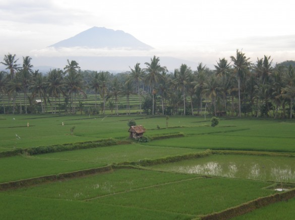 rice paddies and volcano