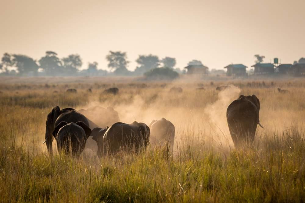 9 Africa chobe