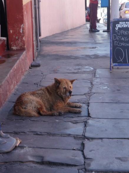 A Neighborhood Street Dog