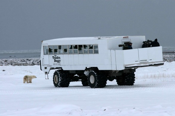 A Tundra Buggy