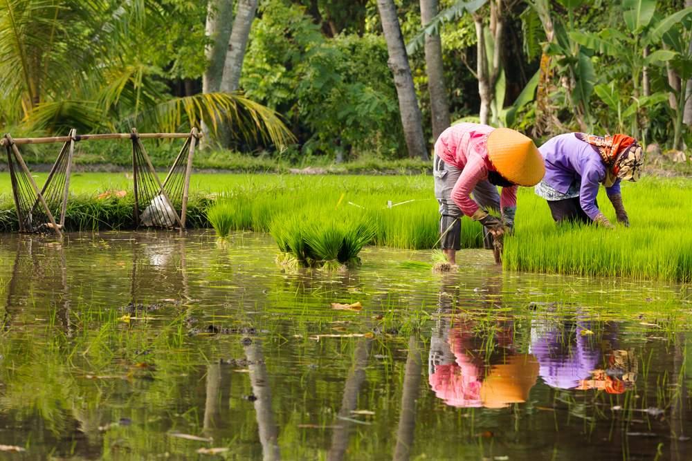 indonesia rural