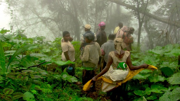 The female farmers descend through the misty rainforest on their way to the farms
