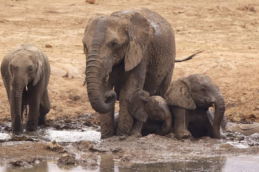 dangerous-elephant