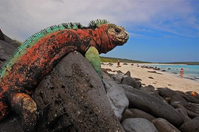 2 - Galapagos