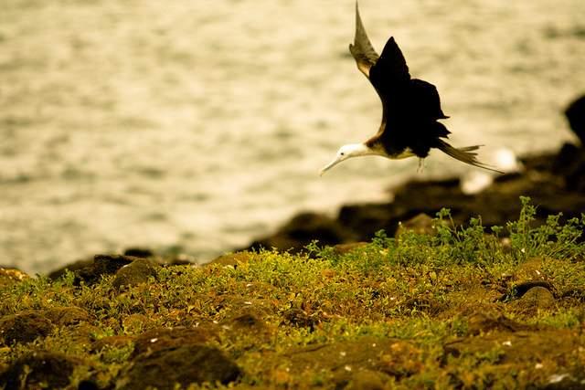 Galapagos Islands - Day 1