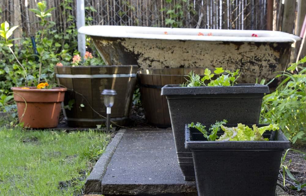 brooklyn--backyard-garden
