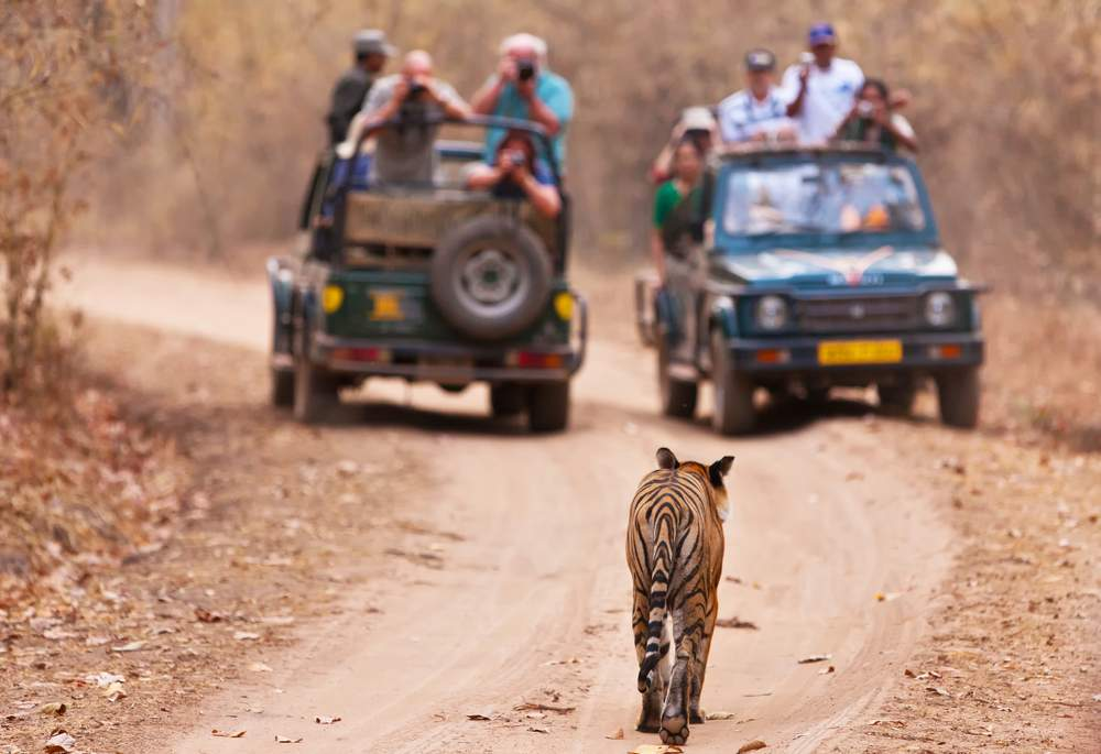 2Wks Safari