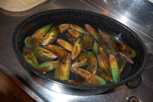 Fresh New Zealand mussels