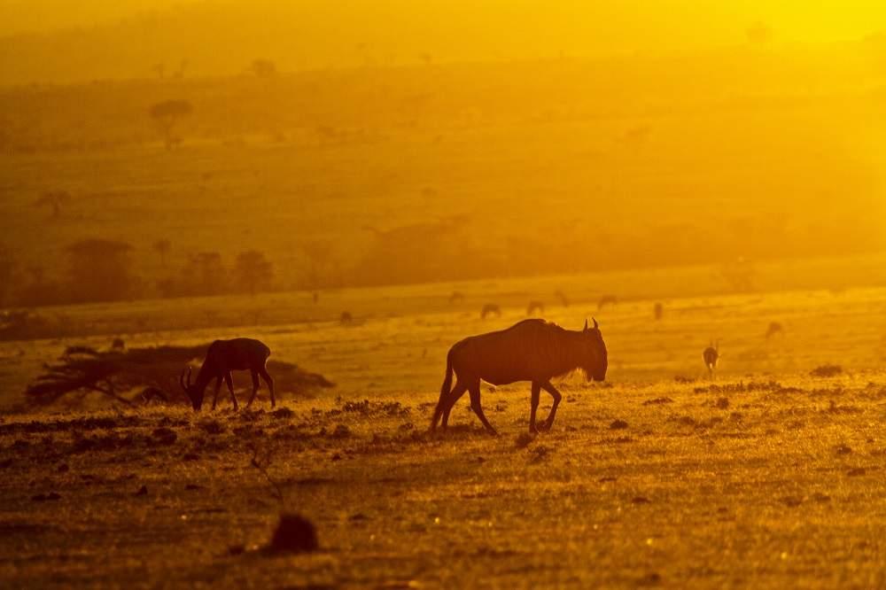 photo safari sunset