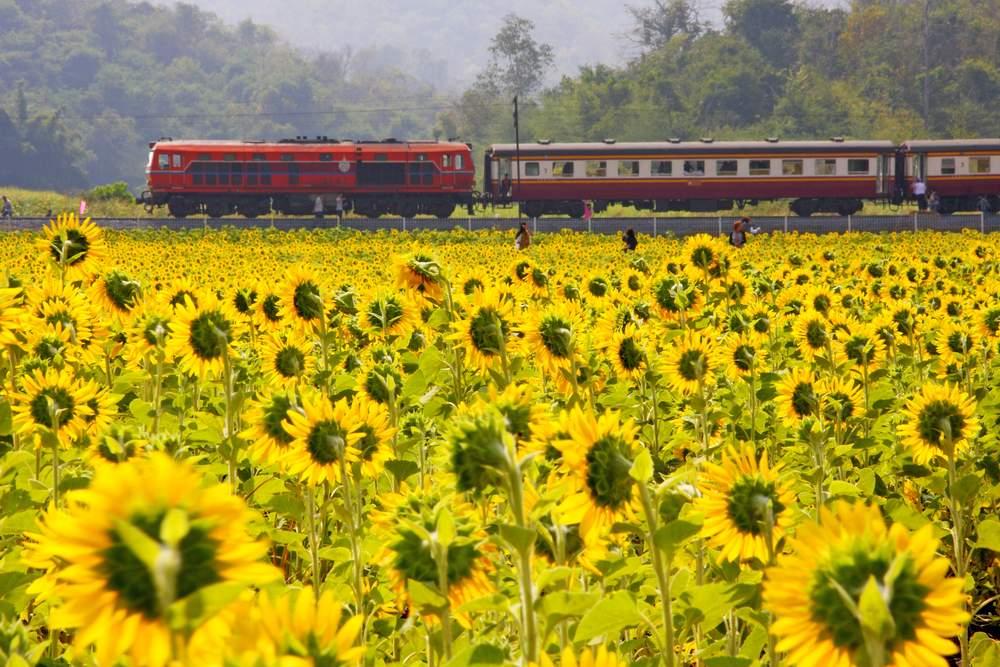train journey best
