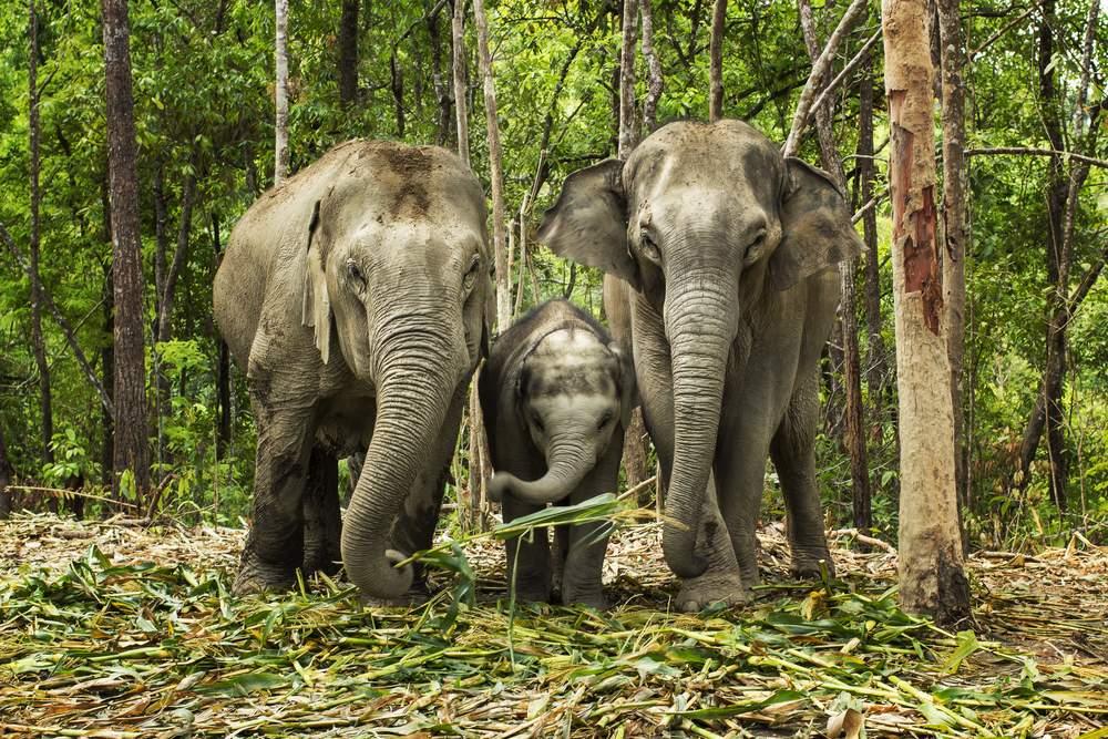 bucket elephant