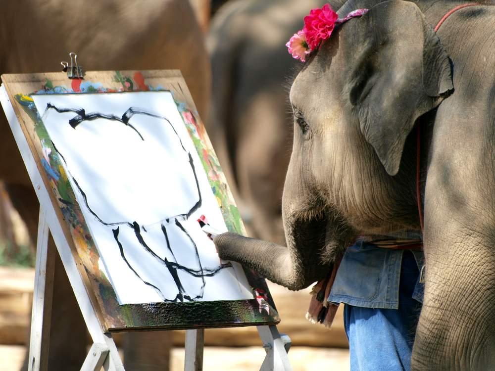 elephant cheaper