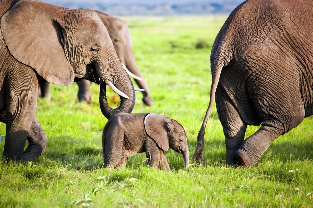 elephant responsible