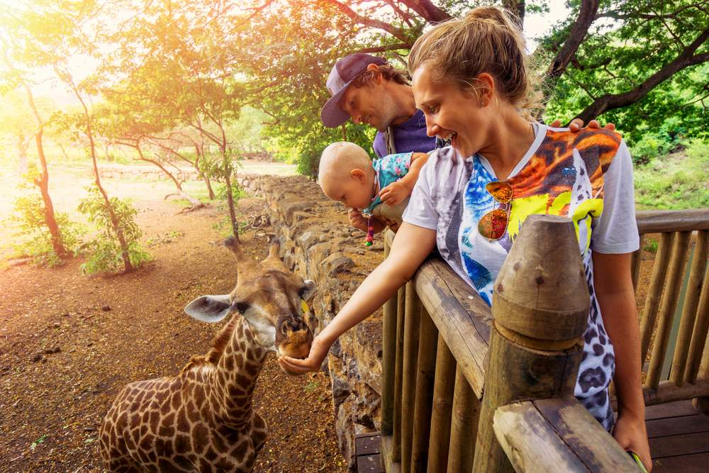 How to Find an Authentic Safari
