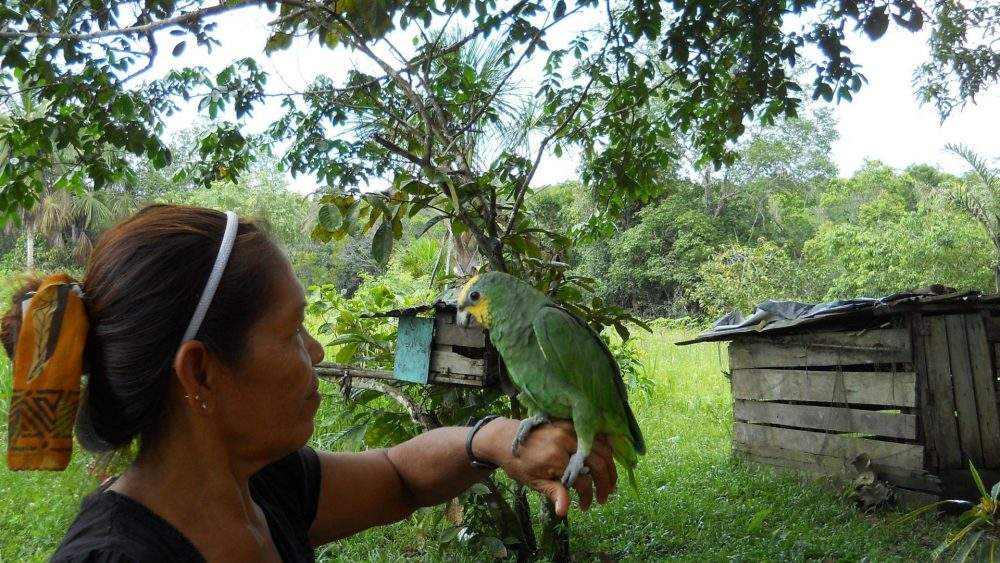 Family Travel in the Amazon