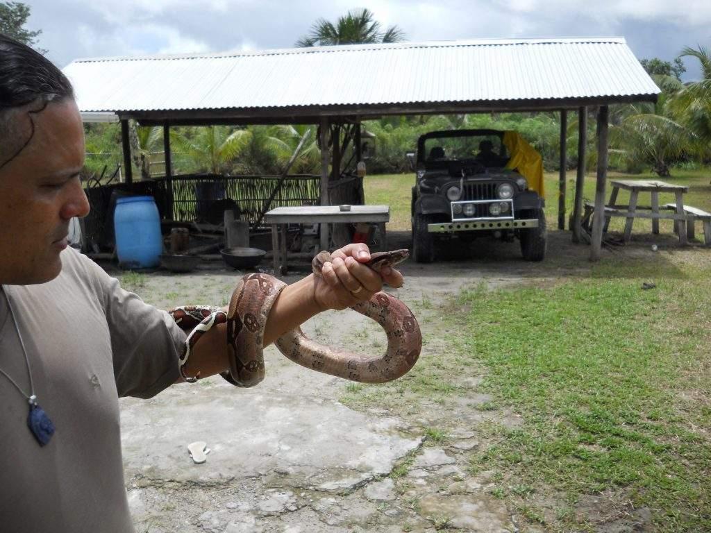 snakes in Amazon
