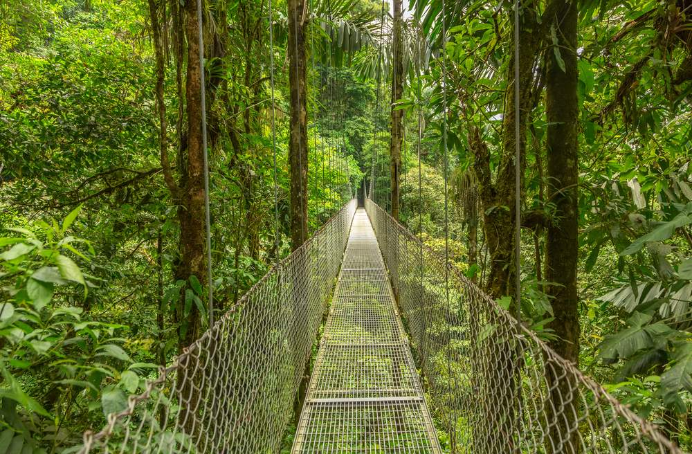 Walk above the forest canopy on a hanging bridge in Costa Rica