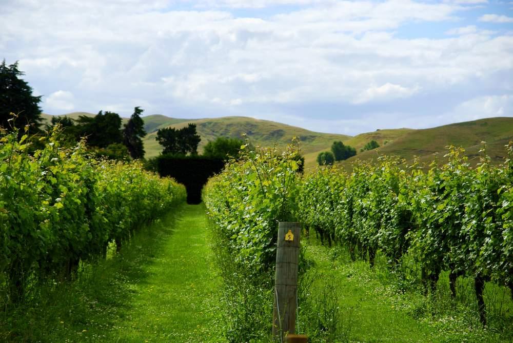 New Zealand's 2nd biggest wine region