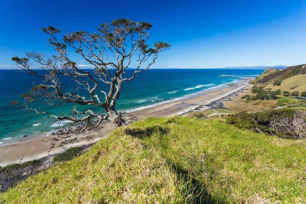 wine tourism in Northern New Zealand