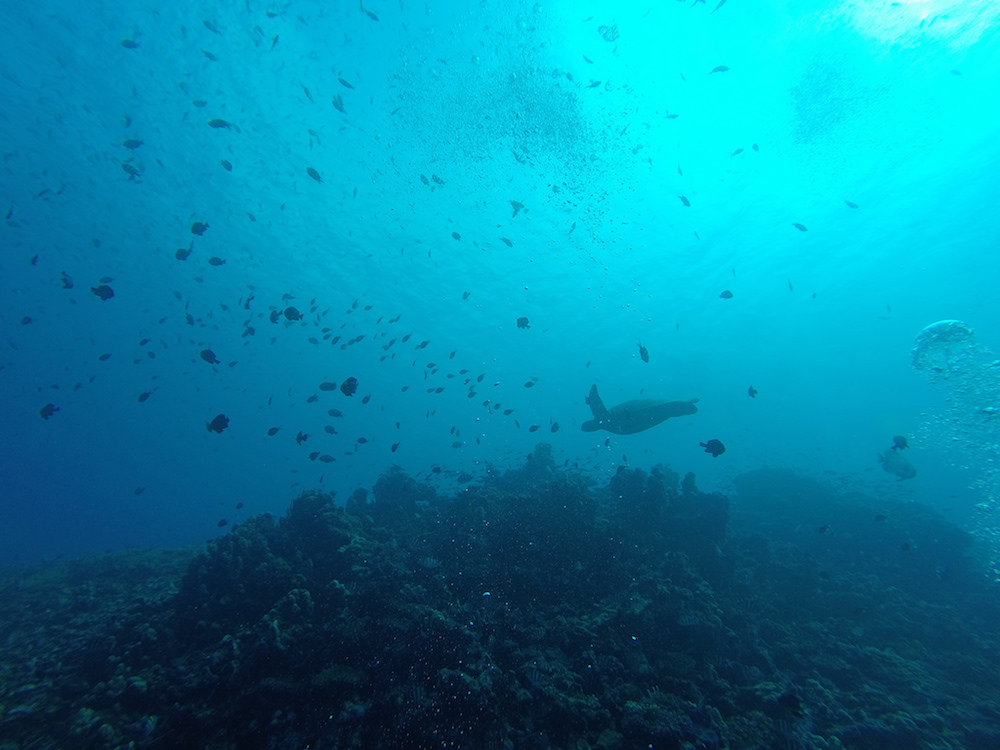 Diving at Gili Islands by Flickr/Francesco